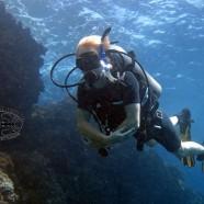 Tauchneuigkeiten aus Koh Phangan von Chaloklum Diving