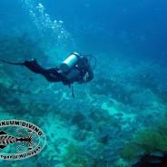 Chaloklum Diving School nähert sich dem 20 Jahre Jubiläum auf Koh Phangan