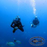 Der Herbstbericht von Chaloklum Diving