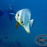 Das Februar-Update von Chaloklum Diving!