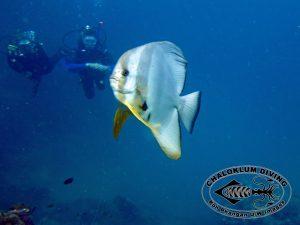 Angthong Marine Park im Golf von Thailand bei einem Besuch von Chaloklum Diving im Februar