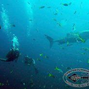 Abschied vom Chaloklum Diving Blog !!