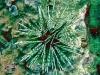 Banded Sea Urchin; Echinothrix calamaris