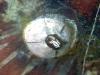 Barnacles & Copepods; Maxillopoda