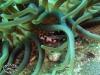 Other Crabs; Crustacea