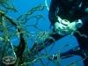 Seagrass Filefish; Acreichthys tomentosus