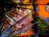 Urchin Clingfish; Diademichthys lineatus